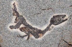 Nel periodo vittoriano i dinosauri vennero etichettati come creature antidiluviane