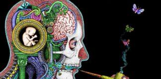 La neurosociologia: origine e sviluppo