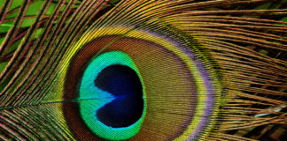 Alle origini della cultura visuale: l'immagine come strumento universale