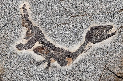 Le ossa molto grandi e i crani con un foro all'altezza degli occhi hanno alimentato le leggende sui dinosauri