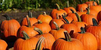 ottobre zucche