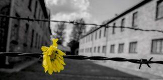 giorno-della-memoria-fiore-giallo