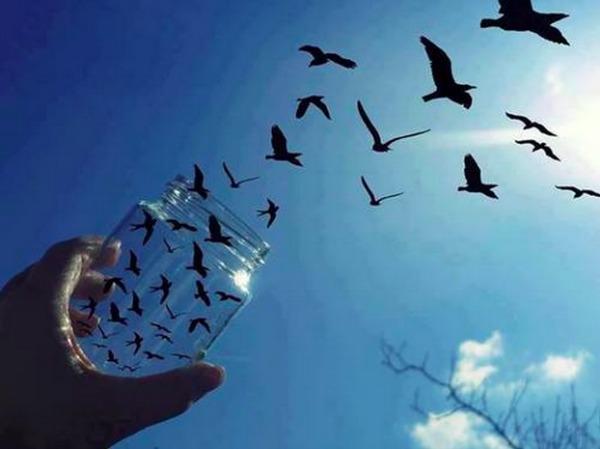 Libertà_barattolo_uccelli